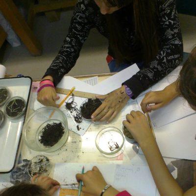 Экология_опыт по биотестированию почв